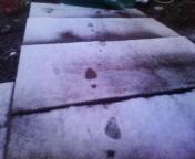 現在の積雪